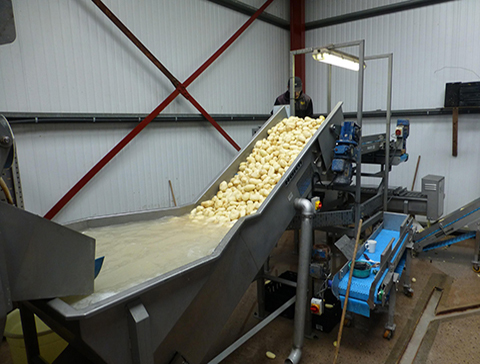 SINGLE POTATO CONVEYOR FOR SLICER